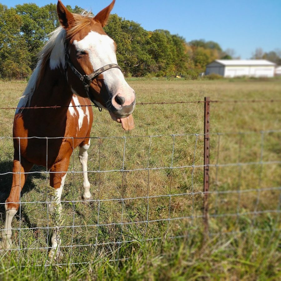 Horses: Murder Beasts